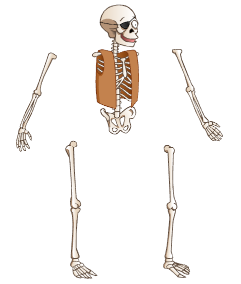 adding the skeleton, Skeleton